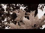 Leaves 3 by LeaLion