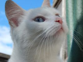 Blue Eyed Kitty by PatrickJr