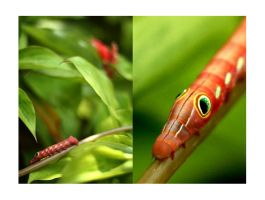 Caterpillar by Jasril