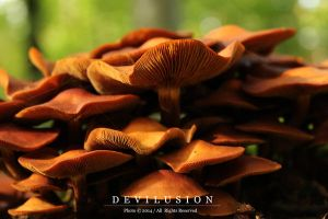 mushrooms 1 by D3vilusion