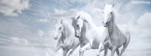 White-horse-facebook-covers by fbcoolcovers