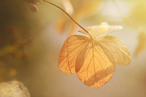 Autumn by JunnyPhotography