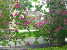 Coral Gables Florida Landscape by Henry V. by HenryValdROCKS