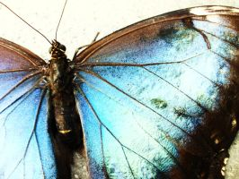 The Butterfly Effect IV by melcow