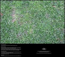 Grass 01 by Neyjour