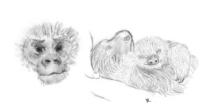 Primate and sloths by Alisha-town