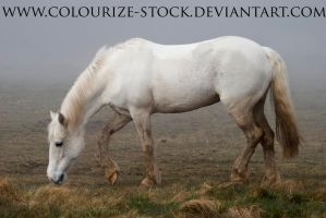 Grey Pony stock by Colourize-Stock