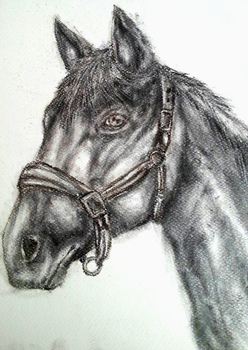 Charcoal Horse by Jufnaty