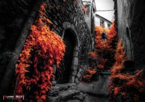Orange Street by bamboomix