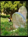 Graveyard Cat by Forestina-Fotos