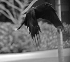 Flying 2 BW by feralSky