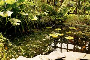Oasis of Tranquility. by quaddie