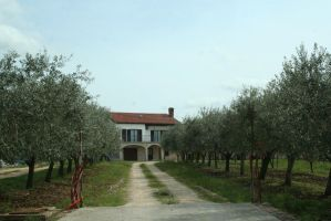 farm with olive trees by ingeline-art
