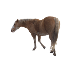Horse Stock PNG by haleycaldwell