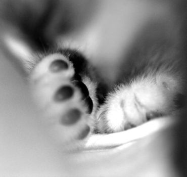 Kitten feet. by Sunita-Sinclair