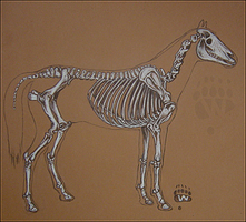 Equine Skeleton by Wursu