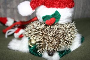 Christmas Hedgie 1 by vrgraphics
