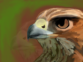Red Tailed Hawk by WolfDrawer108