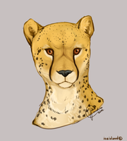 Cheetah by IceIsland