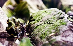 Mossy by aheria
