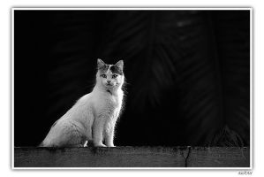 Chat by Azram