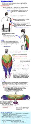 Winged Human Tutorial by dymira128