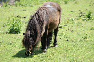 Horse stock 5 by Indrawn-stock