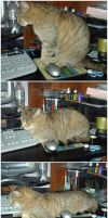 Why a mouse pad should be... by SD-DreamCrystal