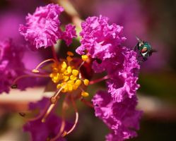 Curly flower and green fly by agaillard