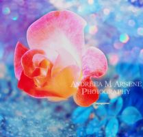 A Soft Touch of a Rose by AndreeaArsene
