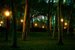Trees and Lights by bloknayrb