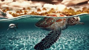 turtle by ven-of