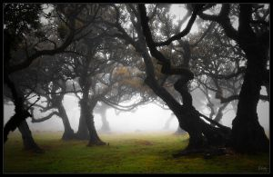 Misty Forest I by Nichofsky