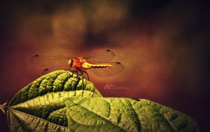 The Dragonfly by ti-DESIGN