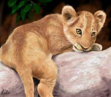 lion cub by lainchan