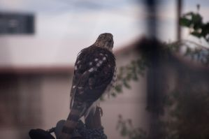 Hawk Post 2 by Dynamoe