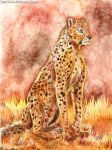 Cheetah by FuzzyMaro