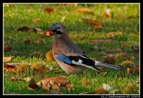 Jay by andy-j-s
