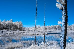 Wharton State Forest - Infrared by TJValentino