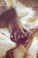 Soft Paw by CheShindra