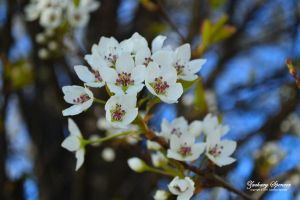 Blossoms by AppareilPhotoGarcon