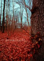crimson forest by Moramarth