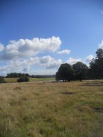 Petworth House and Park 098 by VIRGOLINEDANCER1