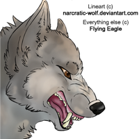 Wolf by basktball2022