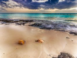 Two conch shells by peterpateman