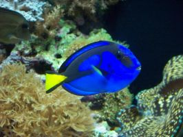 Dory? Is that you? by somebodyaf