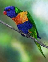 Lorikeet by AshleyStewart