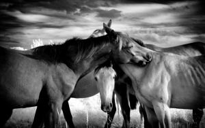 Horses Love infrared by MichiLauke
