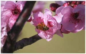 Busy Bee by IgniteImagery