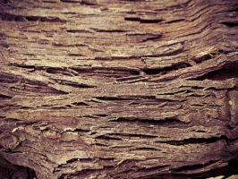Just Wood.. 5 by Youcef07